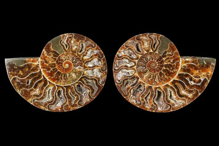 "5.45"" Cut & Polished Ammonite Fossil - Agatized"